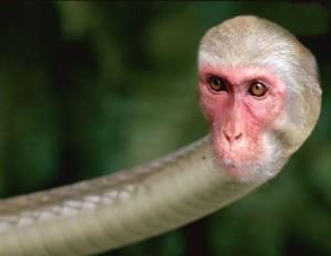 Snake_monkey