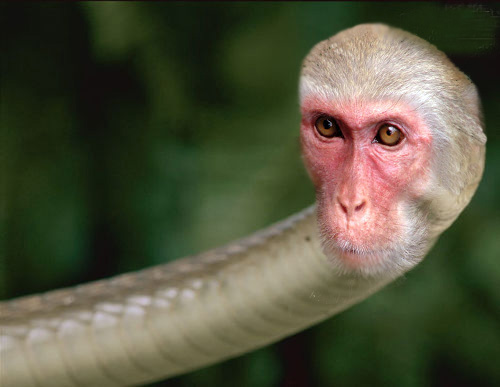 Word of the Week: Monkey-Snake