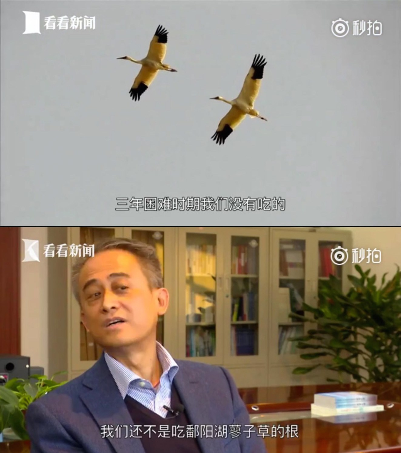 Netizen Voices: Official Tries to Manage Bird Evolution