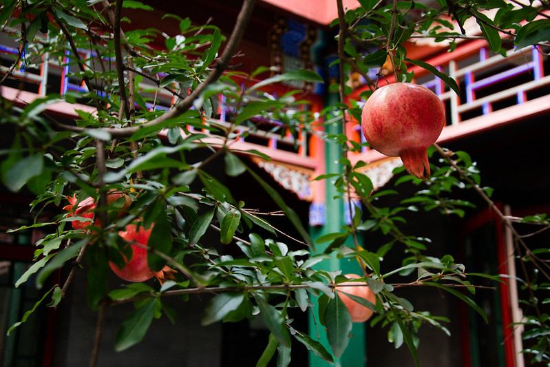 Photo: Pomegranate Tree, by Mitch Altman