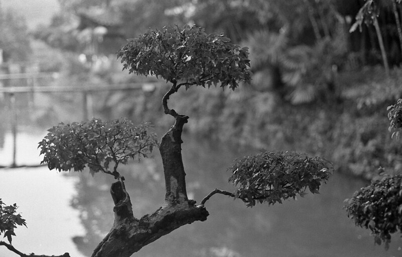 Photo: China – branches, by Lilian J.