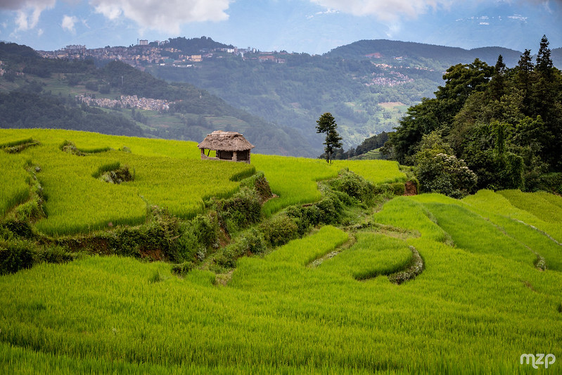 Photo: Rice fields of Yuanyang, by mzagerp