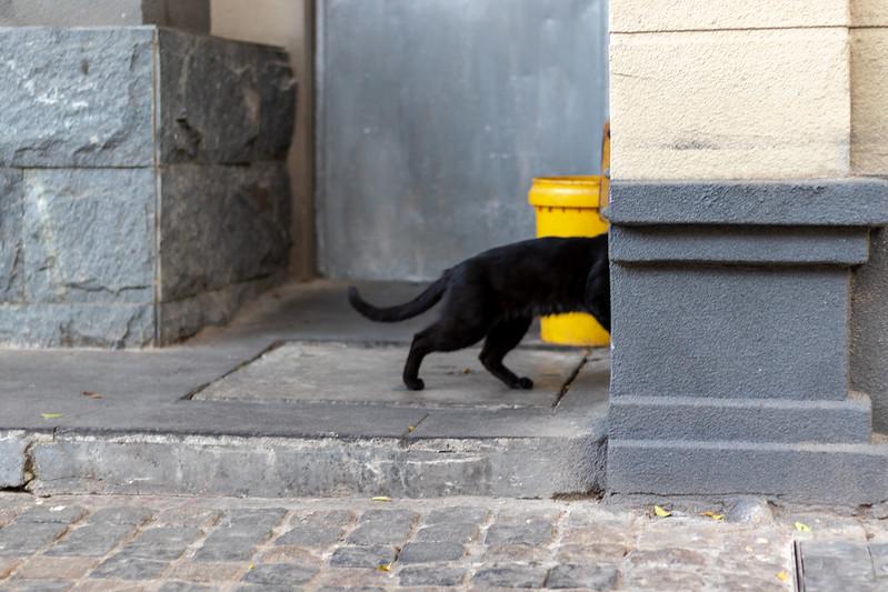 Photo: cat photo in Guangzhou city, by zhizhou deng