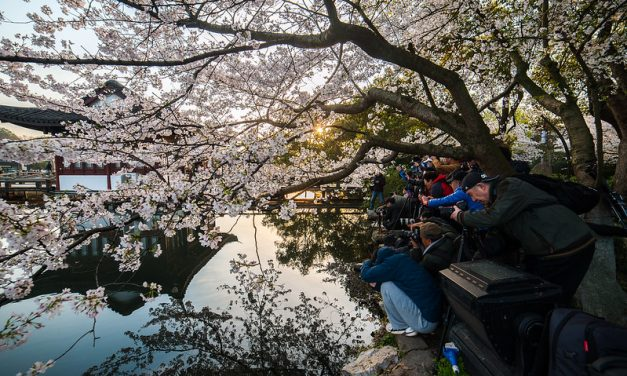 Photo: Hangzhou West Lake Cherry Blossom, by rustler2x4