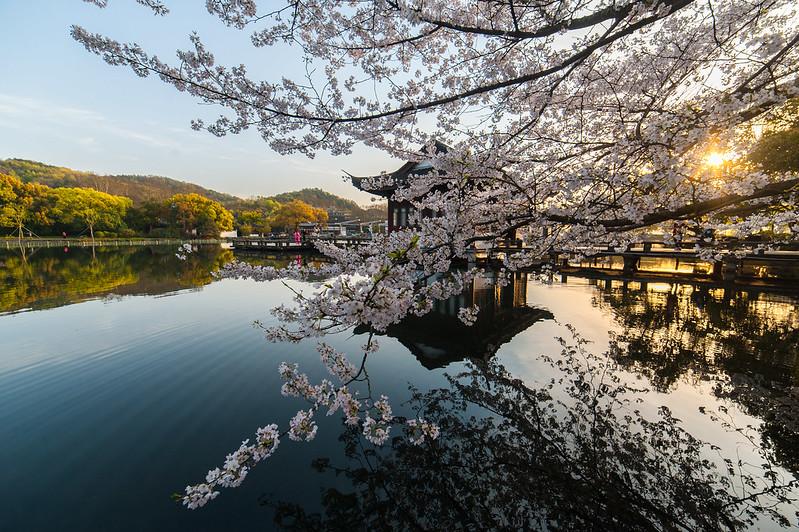 Photo: Hangzhou West Lake Cherry Blossom, by Steven Gitter