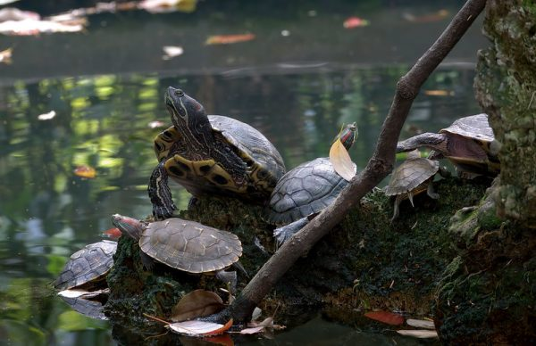Photo: The Turtle pond, by Aardwolf6886